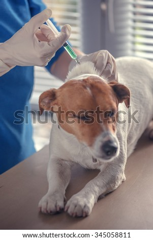 dog injecting by vet doctor - stock photo