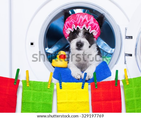 dog inside a washing machine ready to do the chores and homework or housework and clean the  dirt, wearing a shower cap , towel and rubber duck as companion - stock photo