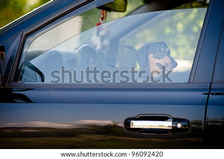 Dog inside of a car waiting on his owner - stock photo