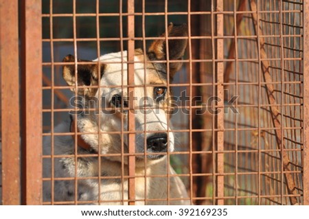 Dog Inside the Cage