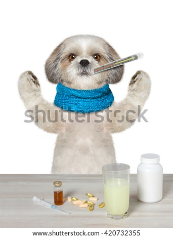Dog is  ill and drinks the medication -- isolated on white