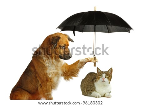 Dog is protecting a cat with a umbrella - stock photo
