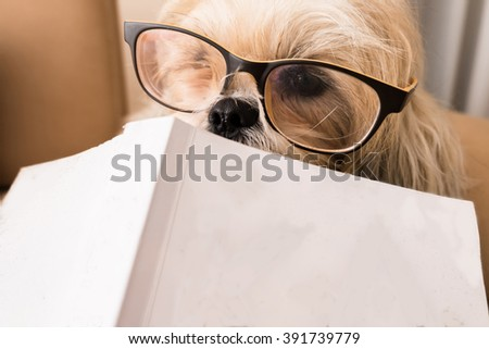 Dog is reading book - stock photo