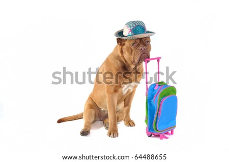 Dog is Ready to go on a holiday trip - stock photo