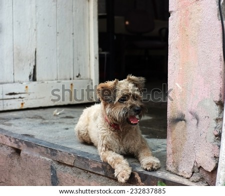 Dog is sitting by the door - stock photo