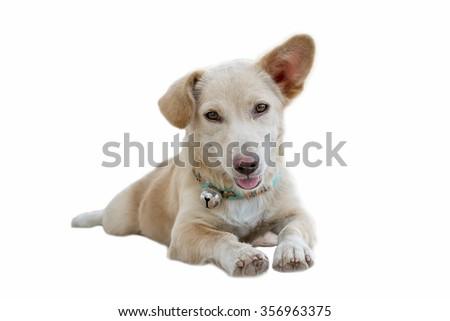 Dog is sitting on white background - stock photo