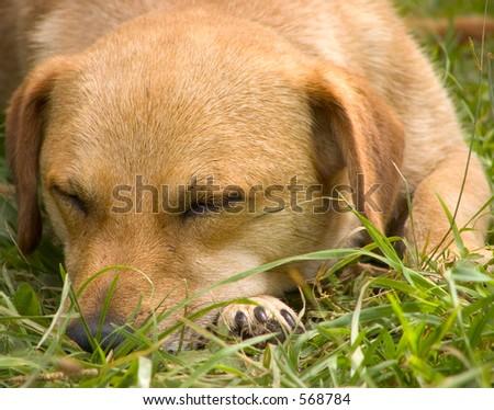 Dog is sleeping - stock photo