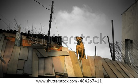 Dog is standing on the roof in the slam of Istanbul, Turkey