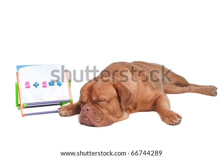 Dog is tired after a math lesson - stock photo
