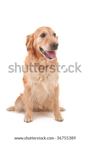 dog isolated o white background