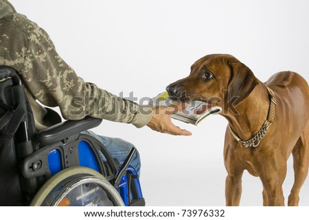 dog ist bringing newspaper - stock photo