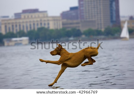 Dog jumping into urban lake. Horizontally framed shot.