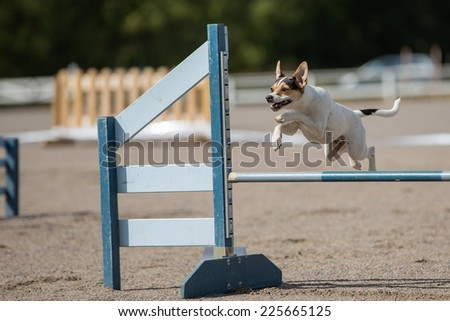 dog jumps over an agility hurdle - stock photo
