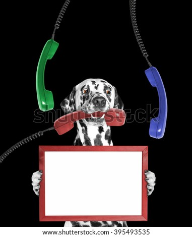 dog keeps frame in its paws and phone in its mouth -- isolated on black background - stock photo