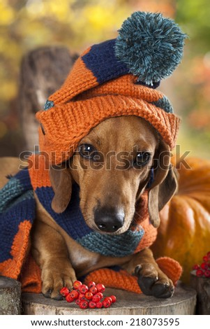 dog knitted hat and scarf - stock photo