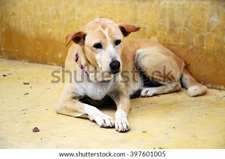 dog laid on the groung with sad feeling - stock photo