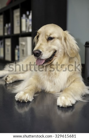 Dog laying in the groomers waiting - stock photo