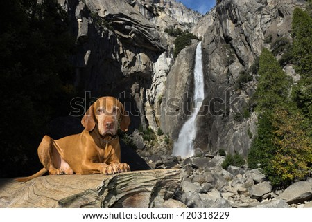 dog laying obediently on tree trunk with waterfall in the background
