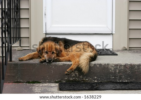 dog laying on stoop