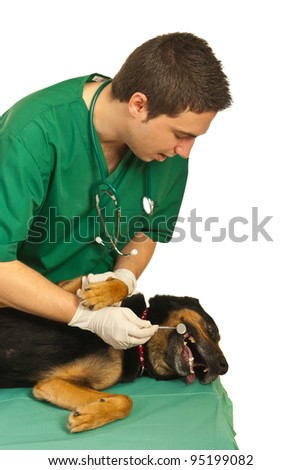 Dog laying on table while  dentist vet looking with the mirror tool at his teeth aganst white background - stock photo