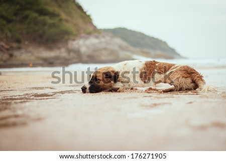 Dog laying on the beach - stock photo