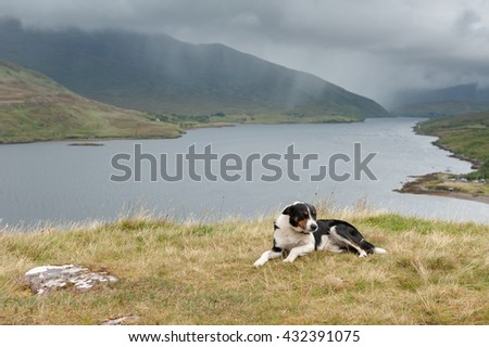 Dog laying on the ground with Killary fjord at background - stock photo