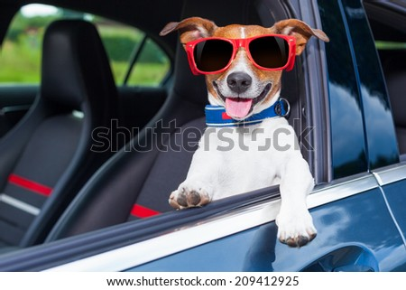 dog leaning out the car window making a cool gesture wearing red sunglasses - stock photo
