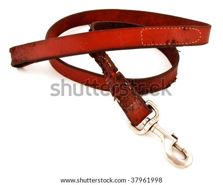 Dog leash chewed by a puppy isolated on white. - stock photo