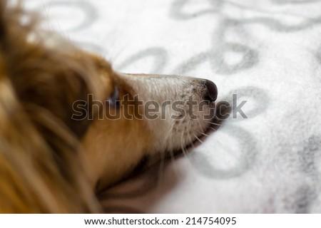 Dog lies on carpet - stock photo