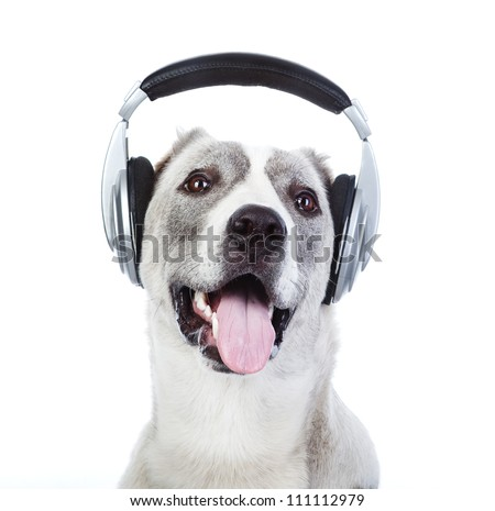 dog listening to music on headphones. isolated on white background - stock photo