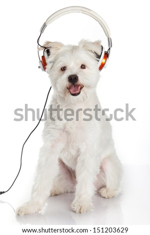 dog listening to music with headphones  isolated on white background. - stock photo