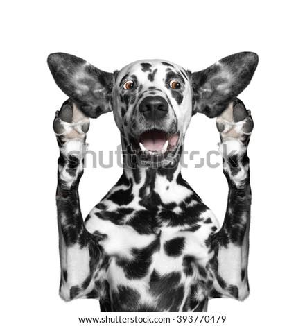 dog listens attentively some strange sounds - stock photo