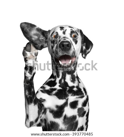 dog listens attentively to his owner - stock photo
