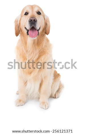 Dog looking at camera in white background - stock photo