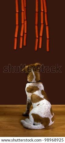 Dog looking at dog. - stock photo