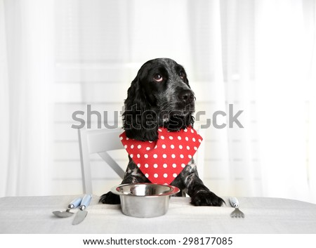 Dog looking at plate of kibbles on dining table - stock photo