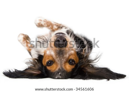 Dog looking at you upside down - stock photo