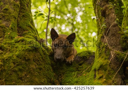 Dog looking from the top of a tree