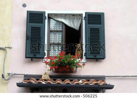 dog looking out of a window. - stock photo