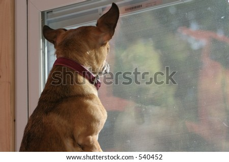 Dog looking out of new construction window - stock photo