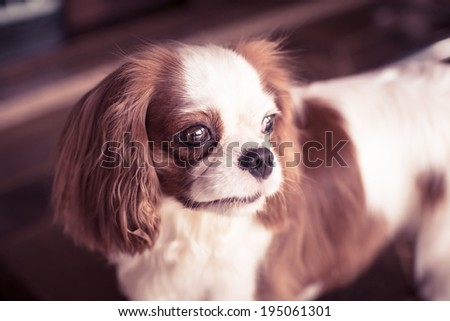 Dog looking outside - stock photo