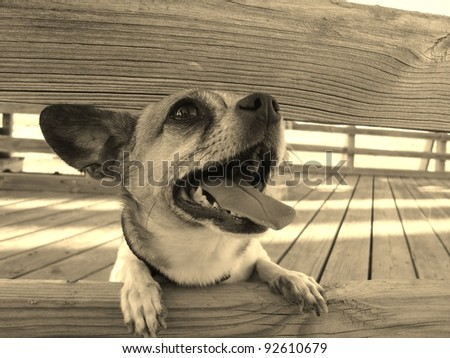 Dog Looking Through The Fence - stock photo