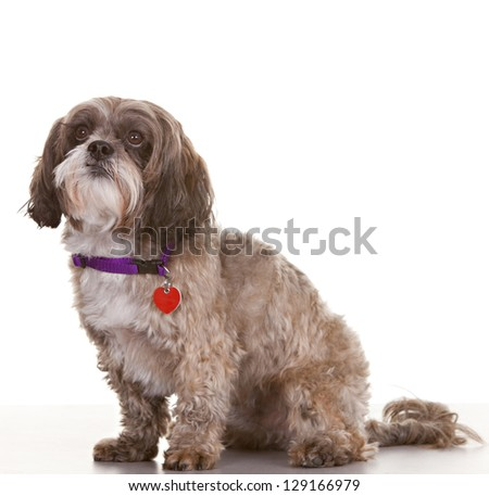 Dog looking towards white space - easy to expand for message use. - stock photo
