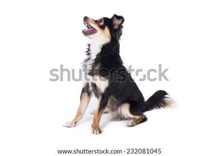 Dog looking up smiling - stock photo