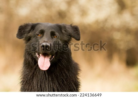 Dog looks happy into the camera