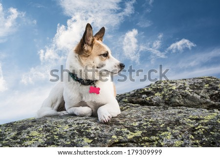 dog lying on a rock and looking in the distance - stock photo