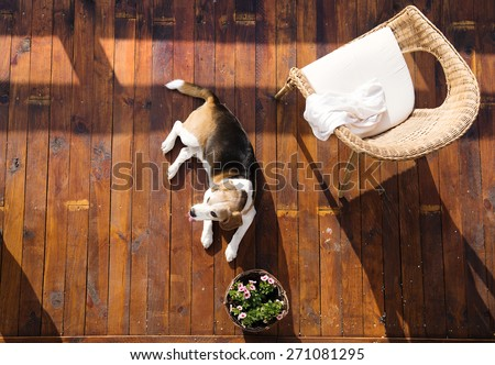 Dog lying on a wooden terrace of a family house. - stock photo