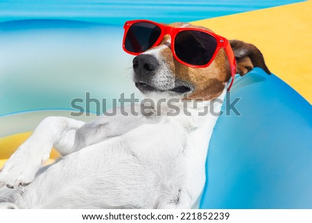 Dog lying on air mattress by the swimming pool sun tanning with sunglasses relaxing and resting - stock photo