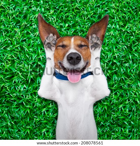 dog lying on grass with silly crazy dumb expression on face sticking out tongue and laughing out loud - stock photo