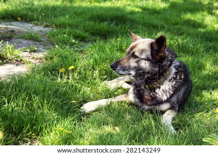 Dog lying on green grass, outdoors - stock photo